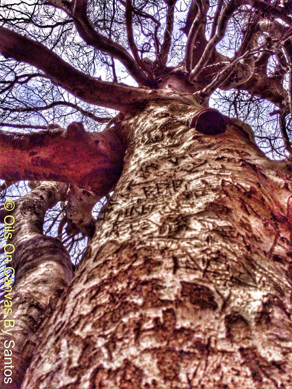 tree trunk, tree, low angle view, growth, branch, nature, textured, day, no people, bark, outdoors, bare tree, beauty in nature, close-up, sky