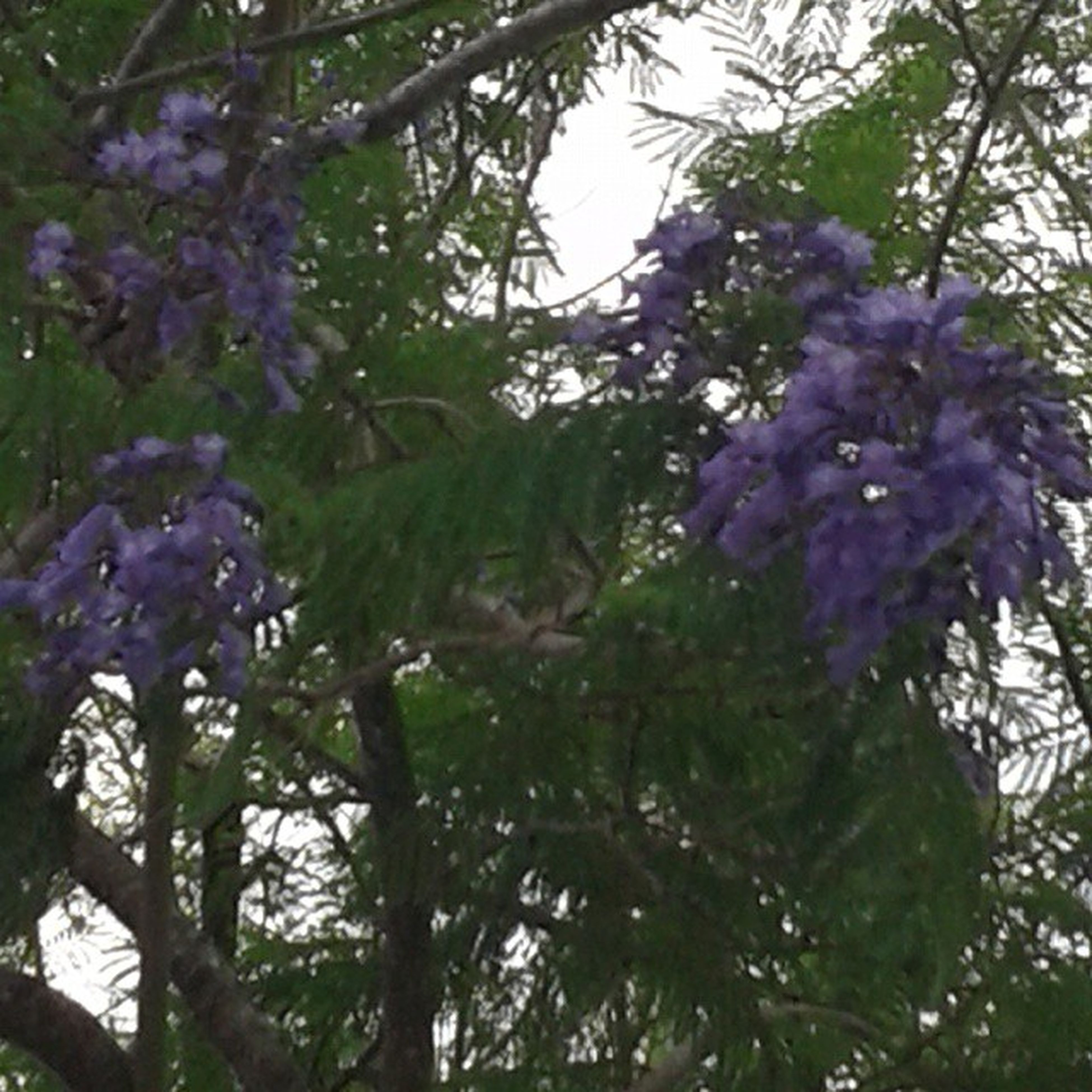 flower, growth, tree, freshness, beauty in nature, branch, nature, fragility, low angle view, blooming, purple, park - man made space, petal, in bloom, plant, close-up, blossom, day, focus on foreground, sunlight