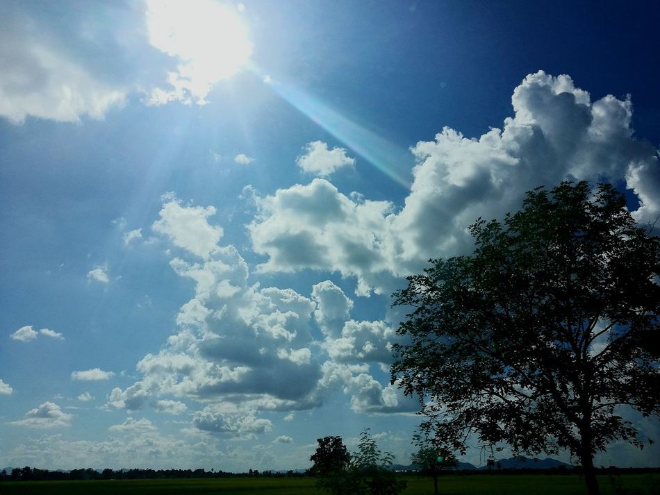 Tree Sky Cloud - Sky Nature No People Outdoors Day Blue Beauty In Nature Forest Landscape Storm Cloud Power In Nature Freshness Kanchanaburi Thailand