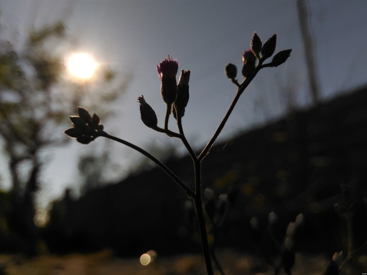 growth, nature, plant, focus on foreground, flower, outdoors, no people, beauty in nature, close-up, fragility, freshness, day