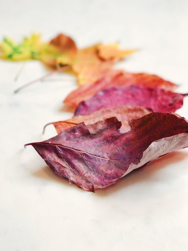 Fall leaves Leaf Autumn Change