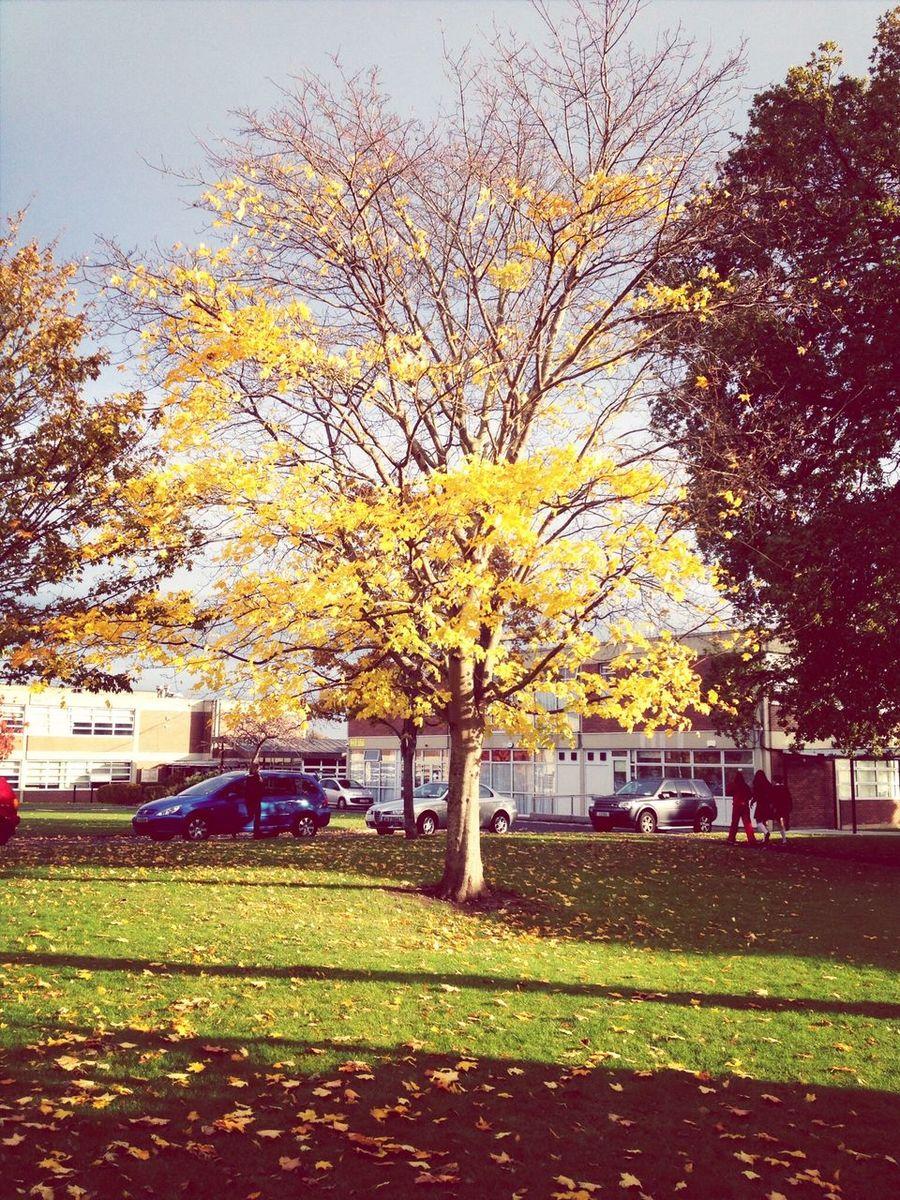 Colors Of Autumn Schoolflow