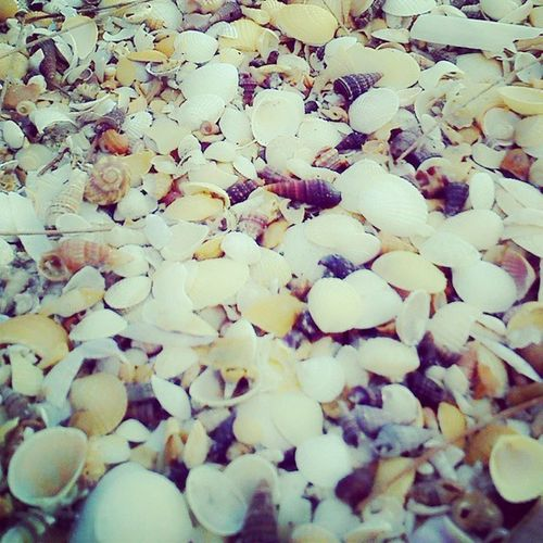 Collect the sea shell.. :* Nitez
