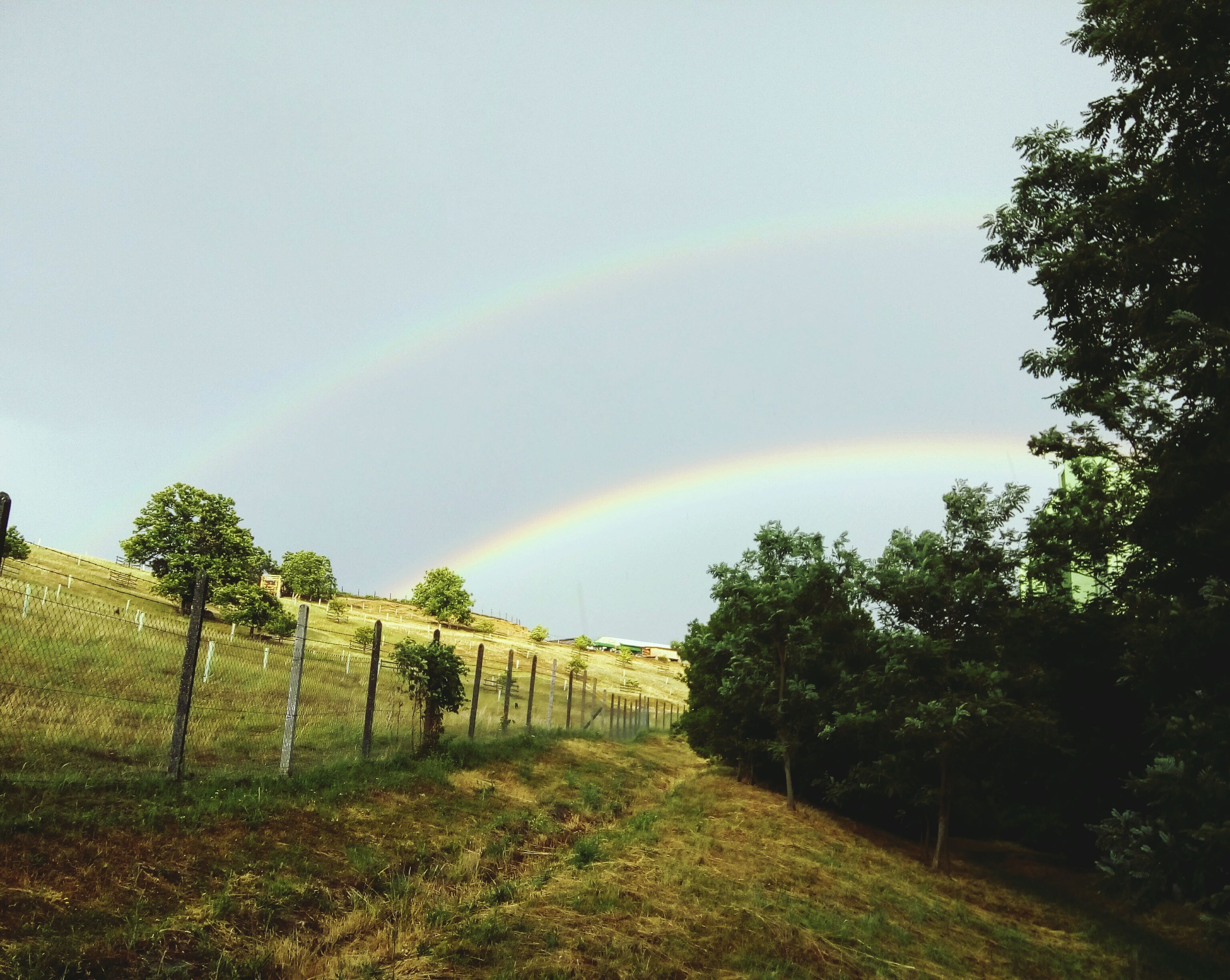 rainbow, tree, nature, no people, day, scenics, tranquility, beauty in nature, double rainbow, landscape, field, sky, tranquil scene, outdoors, grass, growth