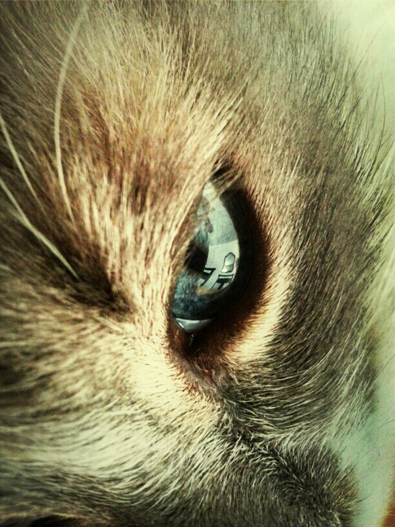 Through A Cat's Eyes