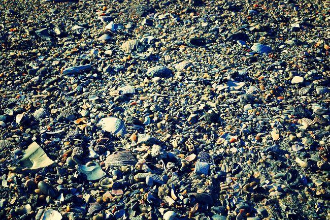 Tranquil Scene Sea Eye4photography  Idyllic EyeEm Gallery Beach Seashells Sun Close-up Scenics Beauty In Nature Enjoying Life
