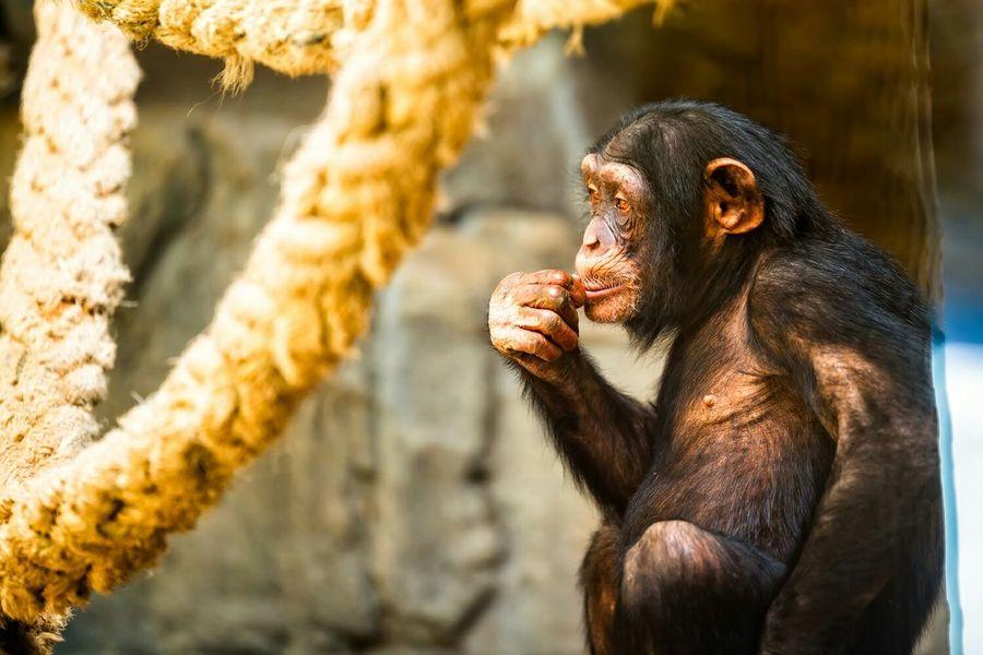 Cogito, ergo sum Nikon D610 Somosfelices Zoo De Barcelona Barcelonalove