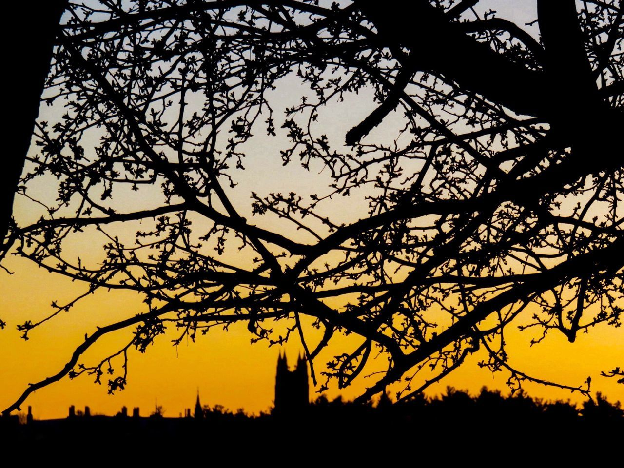 Budding trees & gothic tower silhouetted against the afterglow of a spring sunset. Fine Art Photography The Great Outdoors - 2016 EyeEm Awards Sunset Sunset Silhouettes Sunset_collection Silhouette_collection Silhouette Tree Silhouette Branches And Sky Gothic Architecture Nature Photography Beauty In Nature EyeEm Best Shots - Landscape EyeEm Best Shots - Sunsets + Sunrise Landscape Budding Tree Orange Sky Yellow Sky Serenity Chestnut Hill Reservoir Boston 43 Golden Moments Evening Sky Spring Buds On Branches