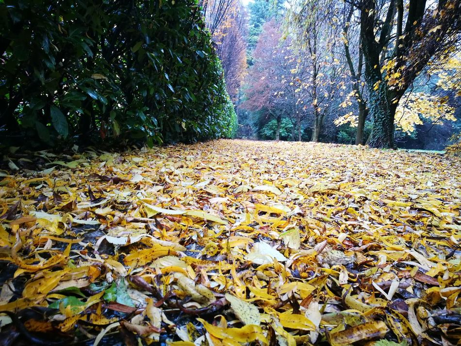 I colori dell'autunno Mirano Nature Tree Leaves Autumn🍁🍁🍁 Italy🇮🇹 My Year My View