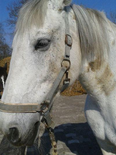 was ist groß, weiß und riecht wie'n Pferd??