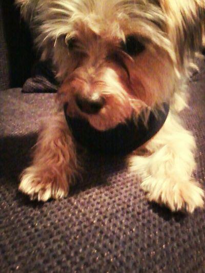 Paula*-* Cute Pets