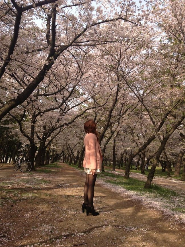 桜 Sakura Flowers