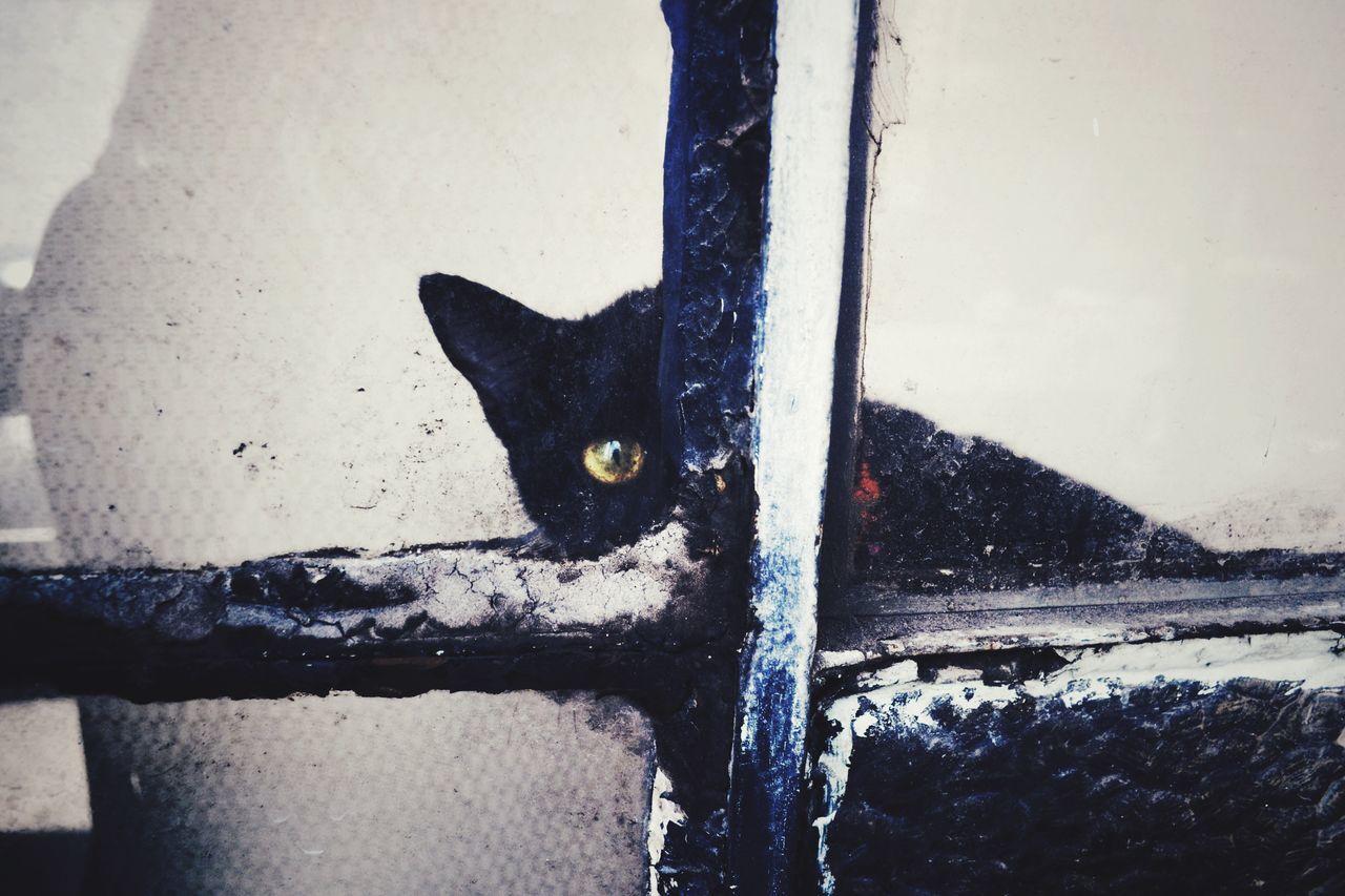 Portrait Of Cat Peeking From Window