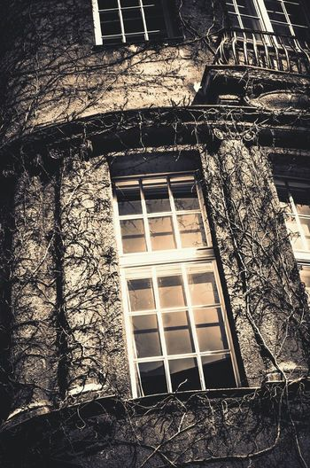Creepywindowsunday EE_Daily: Black And White Sunday Nature's Takeover Tentacles