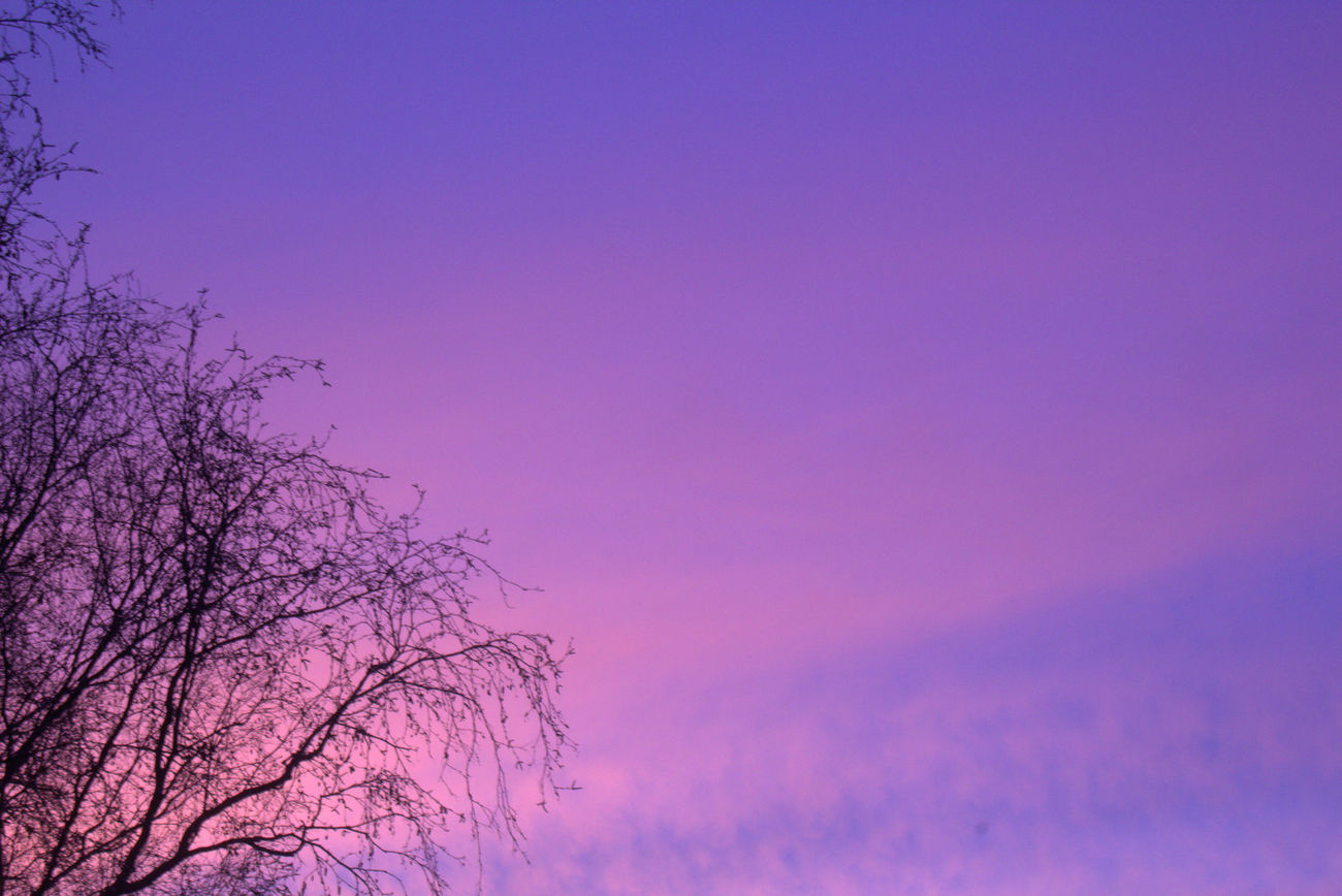 Beauty In Nature Blue Clear Sky Day Low Angle View Nature No People Outdoors Pink Sky Purple Sky Purple Sunset Scenics Sky Sunset Sky Tranquil Scene Tranquility Tree