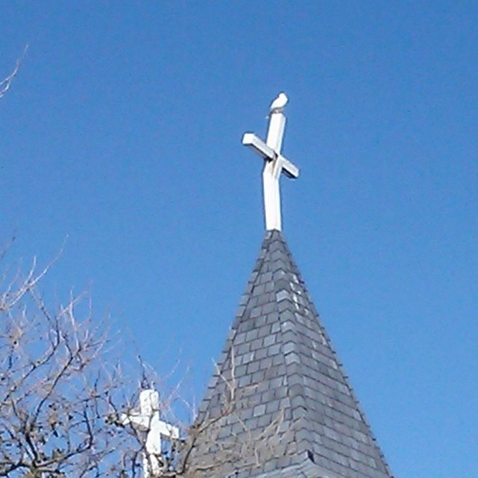 Seagull perched on the broken cross at St. Mary Ocmd