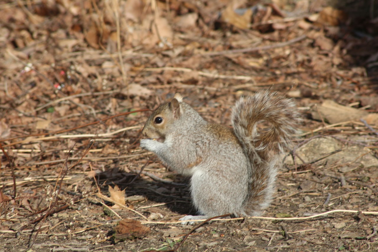 animals in the wild, one animal, animal themes, squirrel, nature, no people, day, full length, outdoors, mammal, sitting, close-up