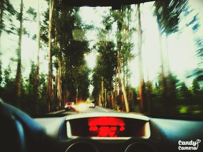 Capturing Motion Car Transportation Car Interior Tree No People Window Driving Vehicle Interior Mode Of Transport Nature Move Movement Movement Photography Tree And Sky Beauty In Nature Capture The Moment Bigtree Moving Up Capturing The Moment Car Movement :(