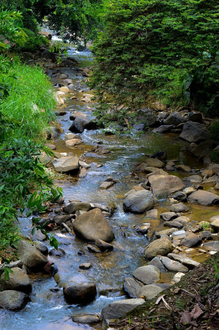 stream, rock - object, nature, water, day, stream - flowing water, no people, outdoors, tranquility, forest, tree, beauty in nature, grass