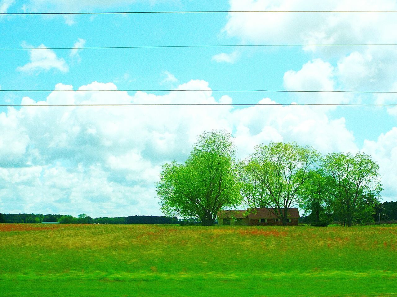 tree, day, no people, built structure, sky, nature, field, outdoors, green color, tranquility, grass, beauty in nature, architecture, cloud - sky, scenics, building exterior