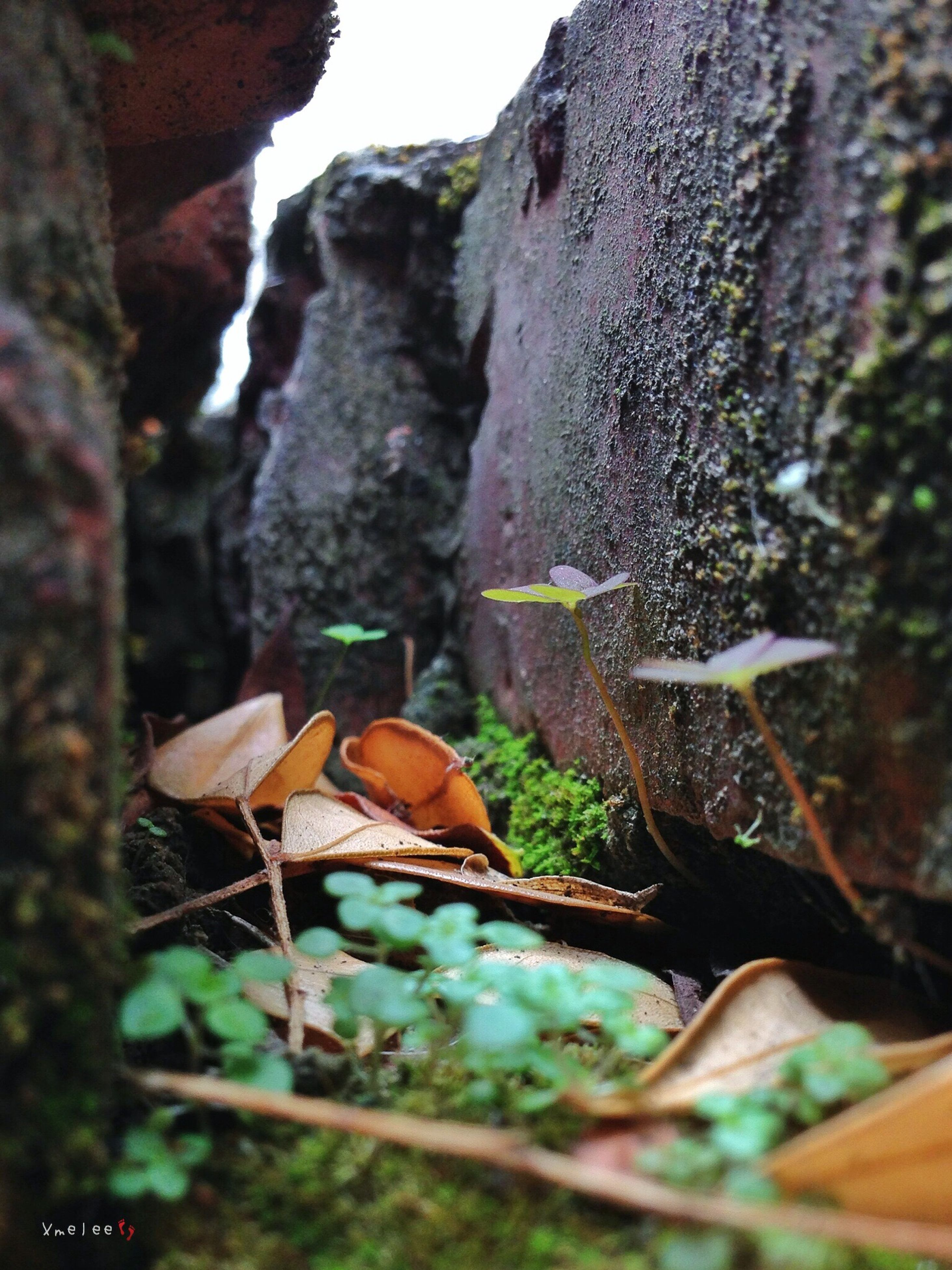 focus on foreground, close-up, nature, selective focus, moss, tree, tree trunk, wood - material, rock - object, beauty in nature, water, day, forest, growth, outdoors, tranquility, no people, plant, green color, leaf