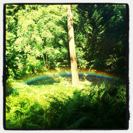 My Own Flower Picturesmake Win Arc Es The Forrest this great Rainbow I get with a watertube, so specially