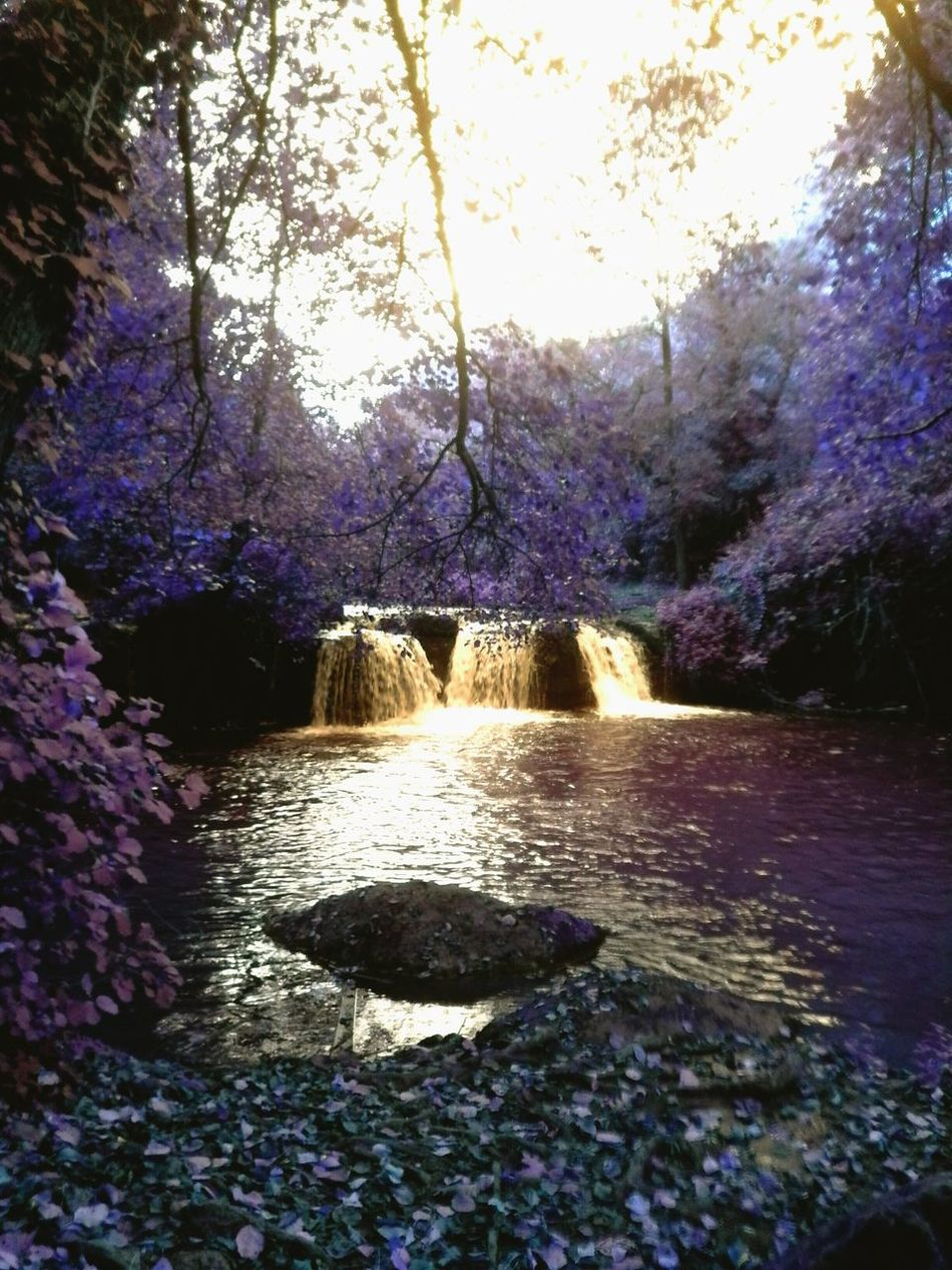 Waterfalls Waterfalls And Calming Views  Playingwithcolours Italy Aroundrome Goldenwater Sunreflection Woods Fairylandscape