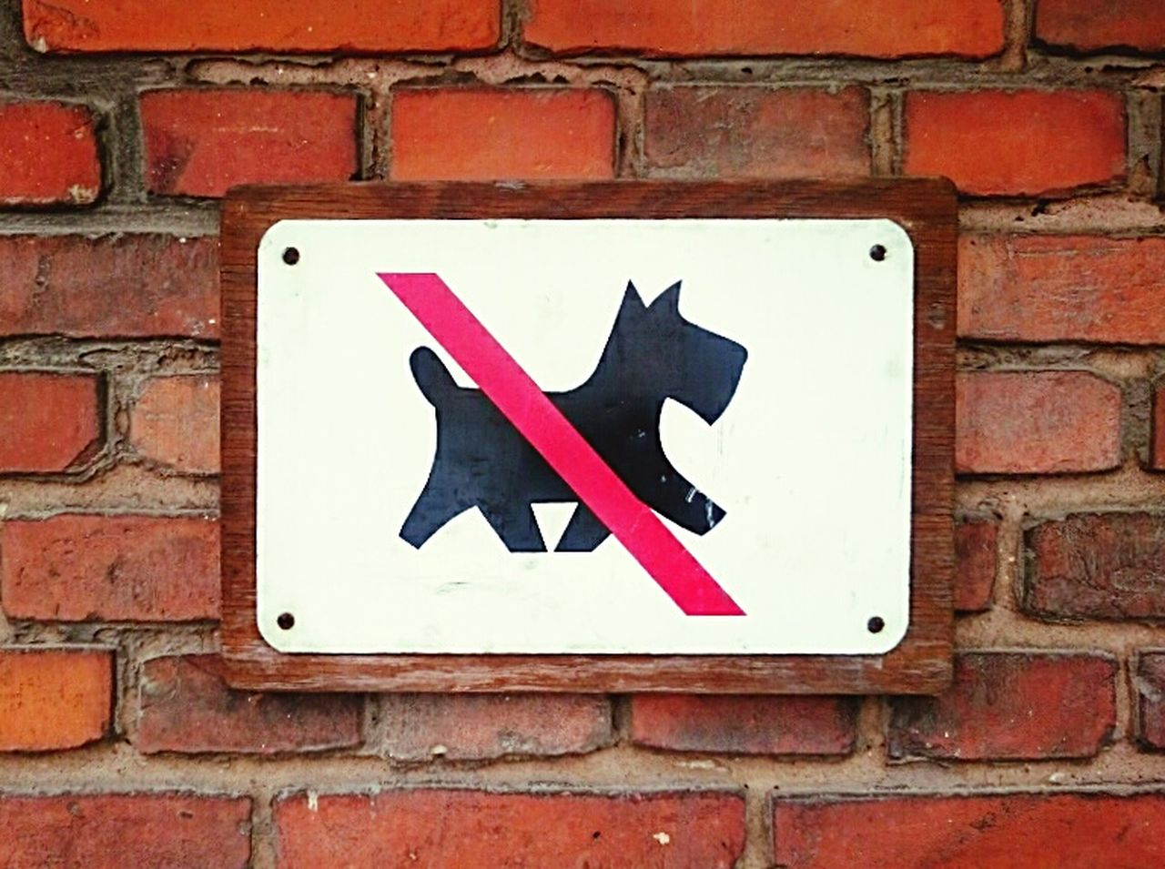 Sign Dog Nodogsallowed Wall Bricks Brick Wall Redbricks