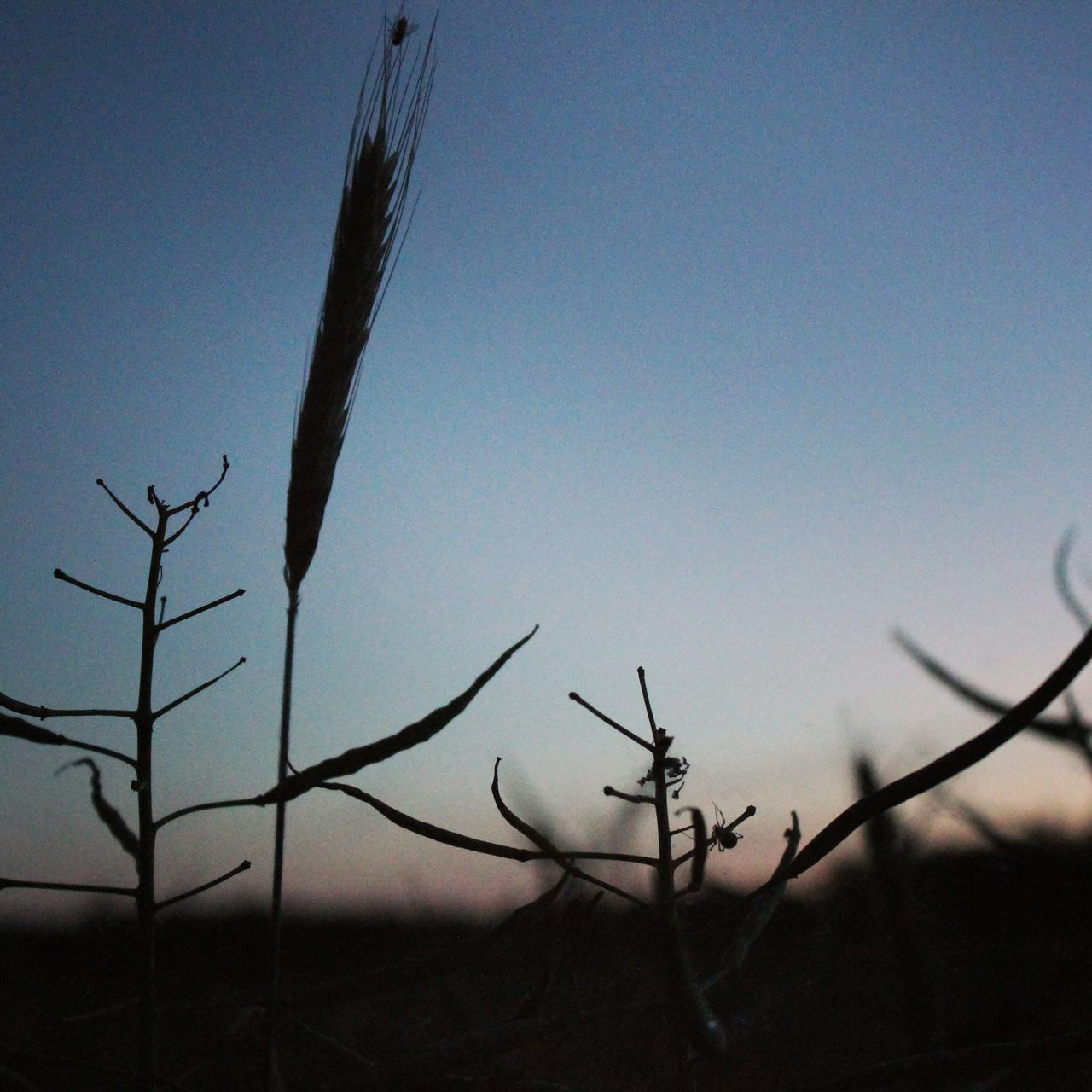 nature, no people, outdoors, clear sky, tranquility, growth, beauty in nature, day, plant, bare tree, branch, sky, close-up