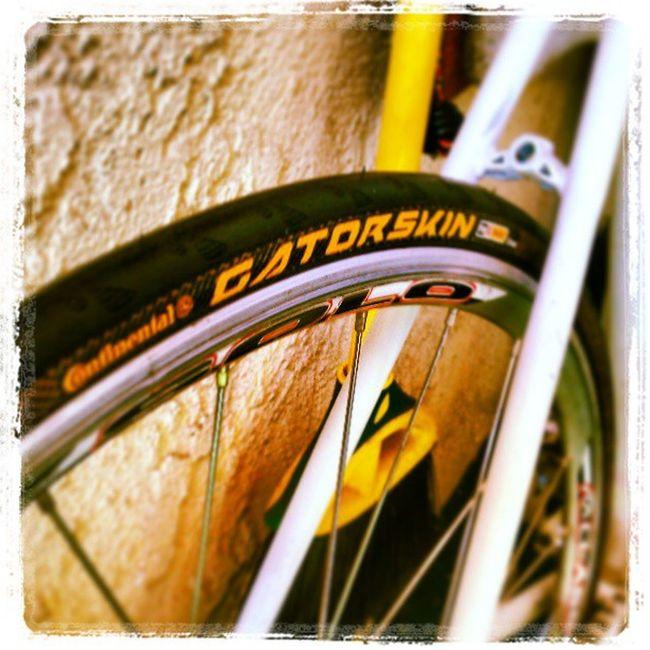 GATORSKIN #new #tire #fixedgear #continental #black #yellow #aclass #solo #sale #sickaf #instadaily Sale Yellow Solo New Black Tire Fixedgear Instadaily Sickaf Aclass Continental