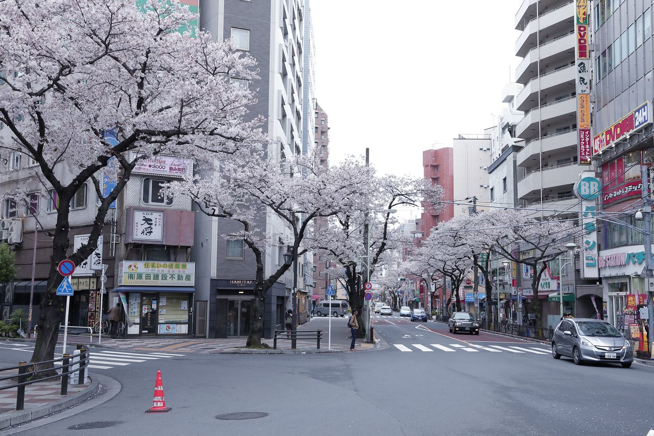 Building Exterior Built Structure Cherry Blossom Cherry Blossoms City City Life City Street Cityscape Flower Flowers Japan Japan Photography Nature Nature_collection Outdoors Sakura Spring Spring Flowers Springtime Street Street Photography Streetphoto_color Streetphotography Tokyo Street Photography Tree