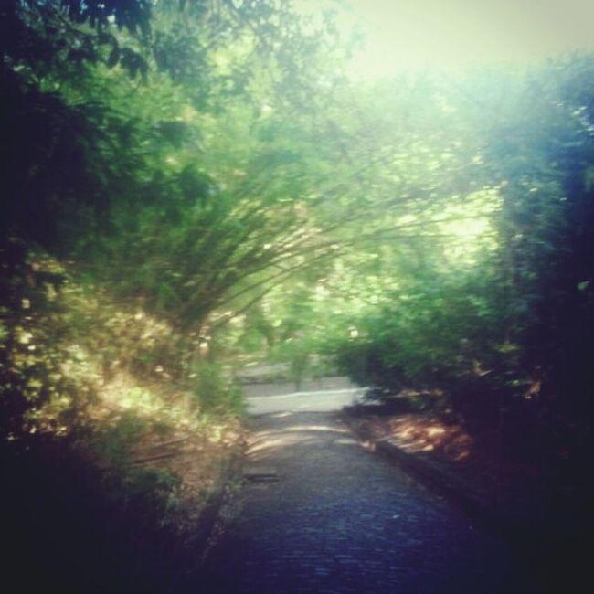 Trees Lostplaces Deadplaces