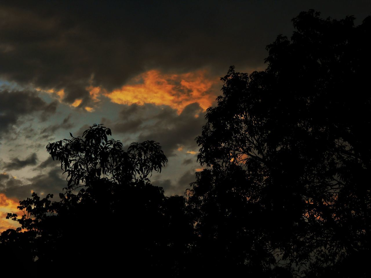 tree, silhouette, nature, beauty in nature, sky, tranquility, growth, no people, sunset, tranquil scene, scenics, cloud - sky, outdoors, low angle view, forest, branch, day