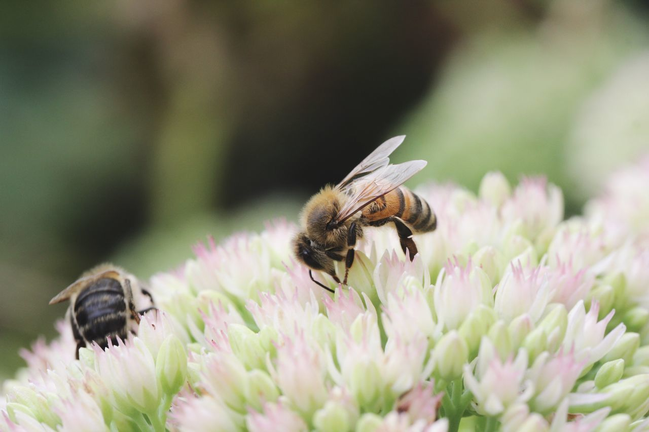 EyeEm Selects Insect Animals In The Wild Flower Animal Themes Nature Animal Wildlife Petal Growth Bee Plant Beauty In Nature Pollination Flower Head Freshness Bees Fragility Focus On Foreground Garden Summer Spring Flowers One Animal Wildlife Freshness Sommergefühle EyeEm Selects
