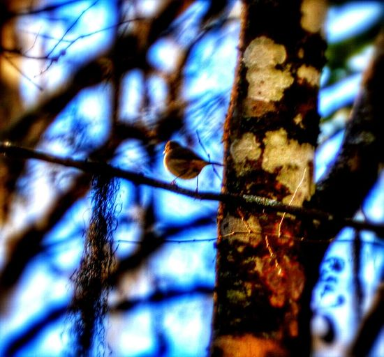 The tiniest bird ever up in the trees.. Enjoying The Sun Escaping Trees Hiking Getting In Touch Nature Forest Birds