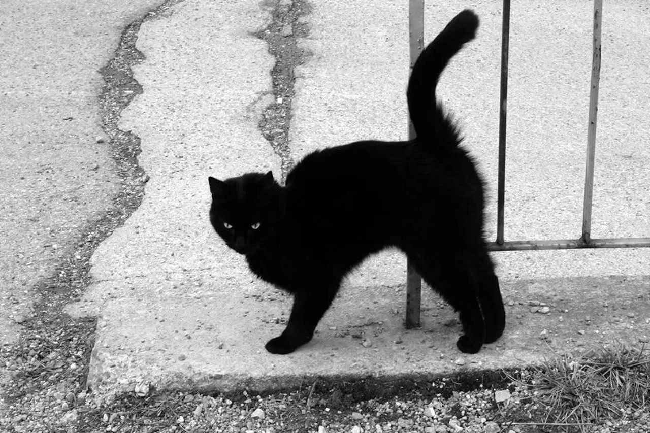 Taking Photos Black And White Cats Streetphoto_bw