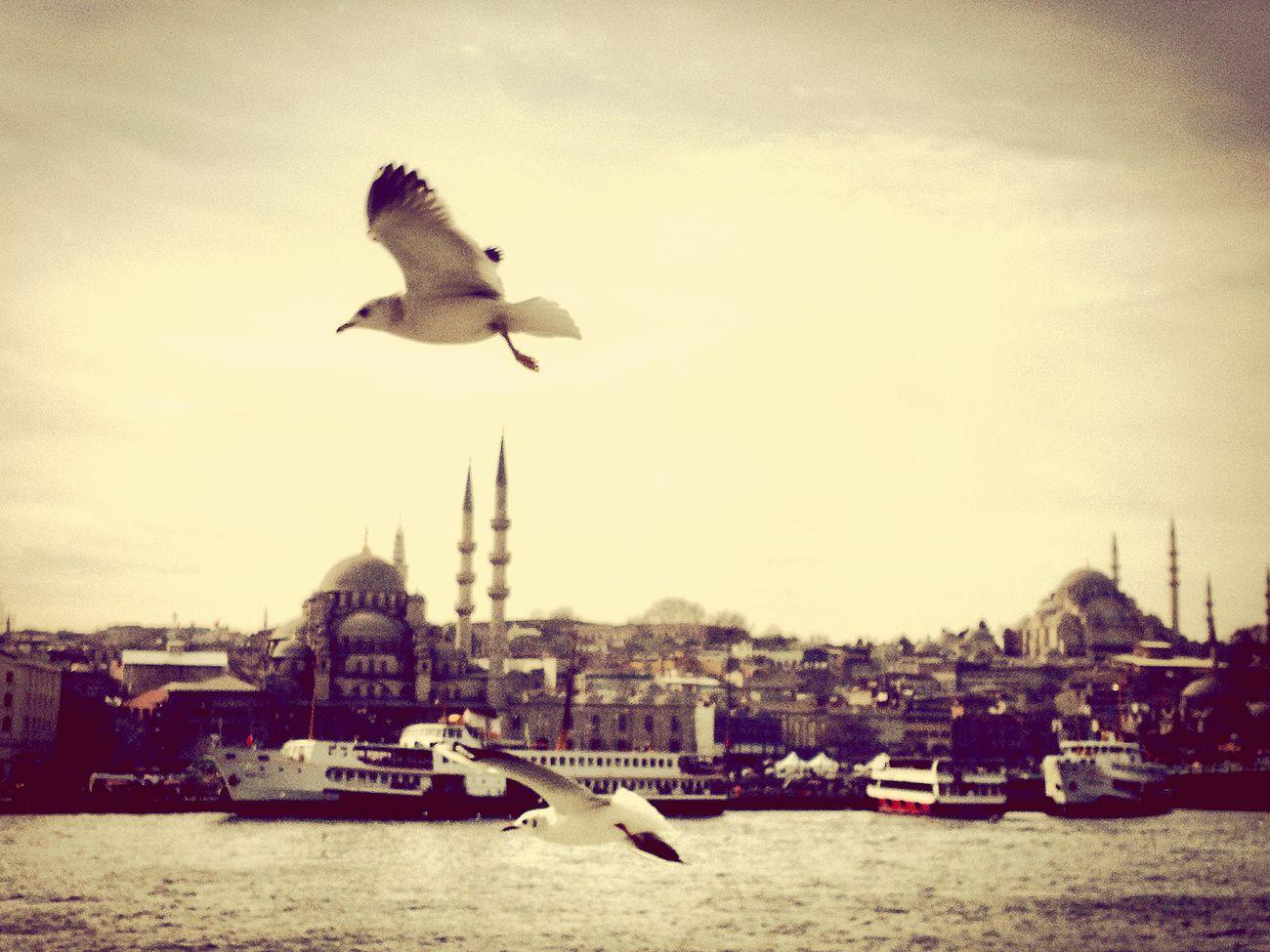 Istanbul Sunset Eyem Gallery Eyeemphotography EyeEm Best Shots Day Camping Eye4photography  Istanbul Turkey Eminönü/ İstanbul