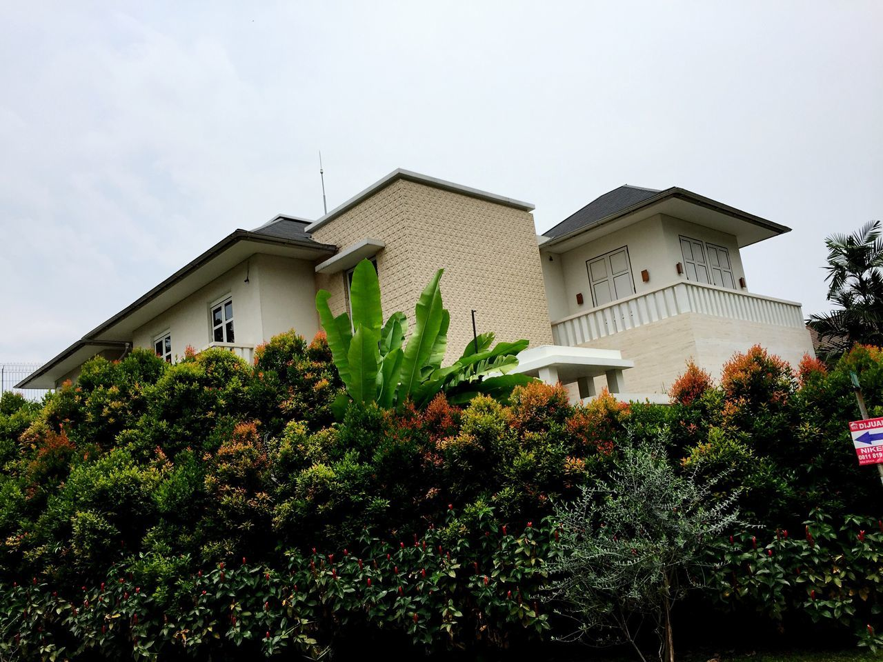 architecture, built structure, building exterior, plant, growth, house, tree, no people, day, nature, outdoors, low angle view, sky, beauty in nature