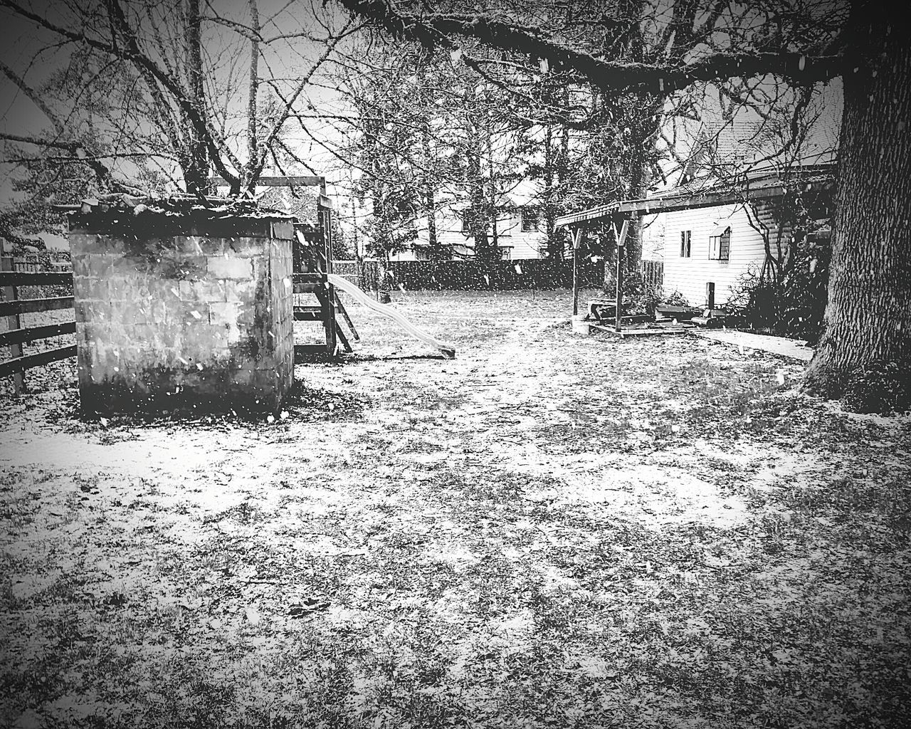 Snowing Snow ❄ Outdoors White Day Slide Black & White Backyard Tree peaceful