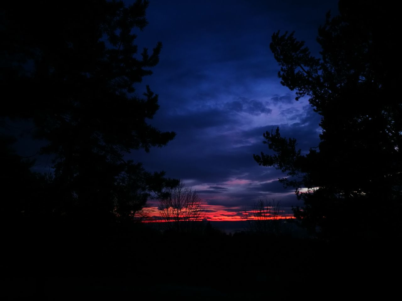 Night Sky No People Tree Beauty In Nature Outdoors Nature Cloud - Sky Lightning Sunset_captures Lights Multi Colored Vibrant Color Norway Colors Lithuanian Girl Power In Nature Landscape Dramatic Sky Purple Nature Beauty In Nature My Year My View Red