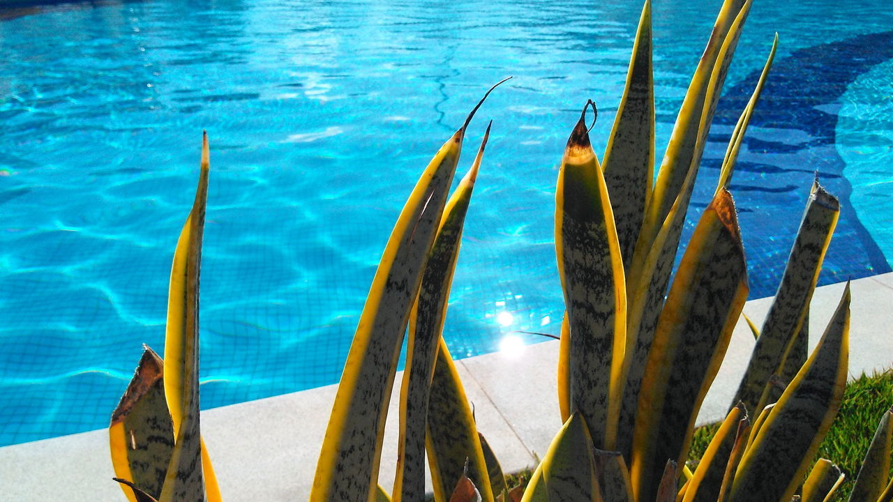 water, day, swimming pool, outdoors, no people, nature, tranquility, sea, blue, beauty in nature, close-up