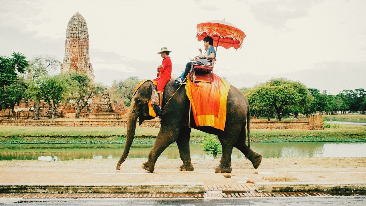 Beautiful stock photos of elefant, one animal, outdoors, animal themes, full length