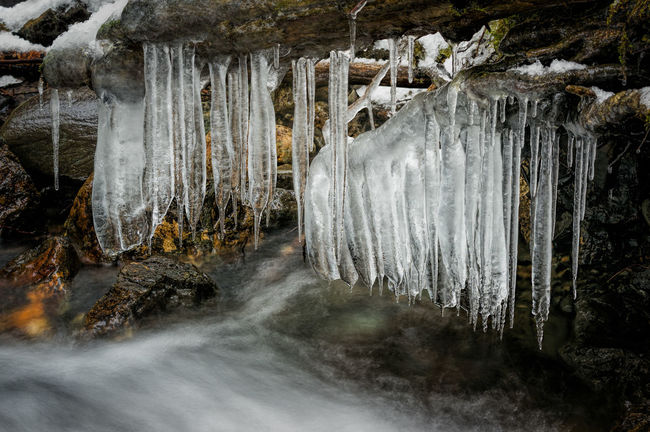 Beauty In Nature Close-up Cold Temperature Day Forest Horizontal Icicles Nature No People Outdoors Scenics Tree Water