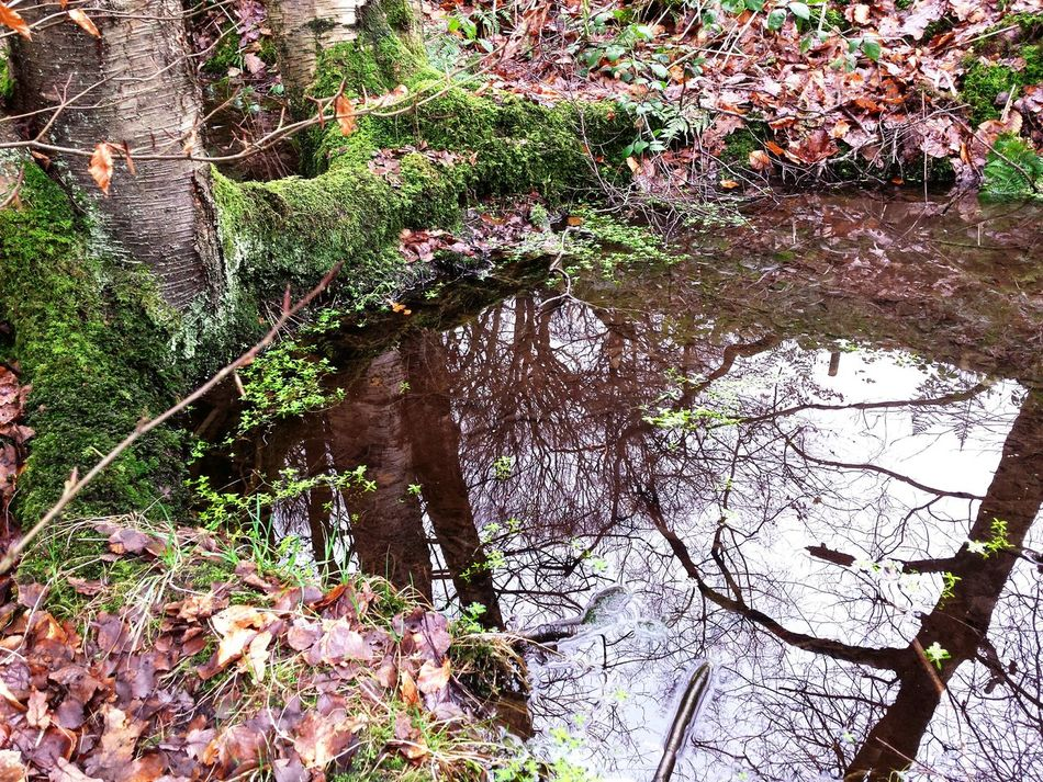 This is the last image taken from the magical pond in the woods in 2015. It's Cold Outside Magic Magical Transformative Supernatural Landscapes Nature Tree Trees Branches Autumn Leaves Woods Leaves Sowerby Bridge Landscape Nature Photography WoodLand Reflection Reflections Water Reflections Water Pools  Puddles Rain Winter