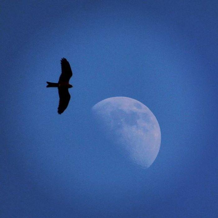Eagle Moon 1200D Canon Canonindia Canon_photos Latepost @andreapicoestrada