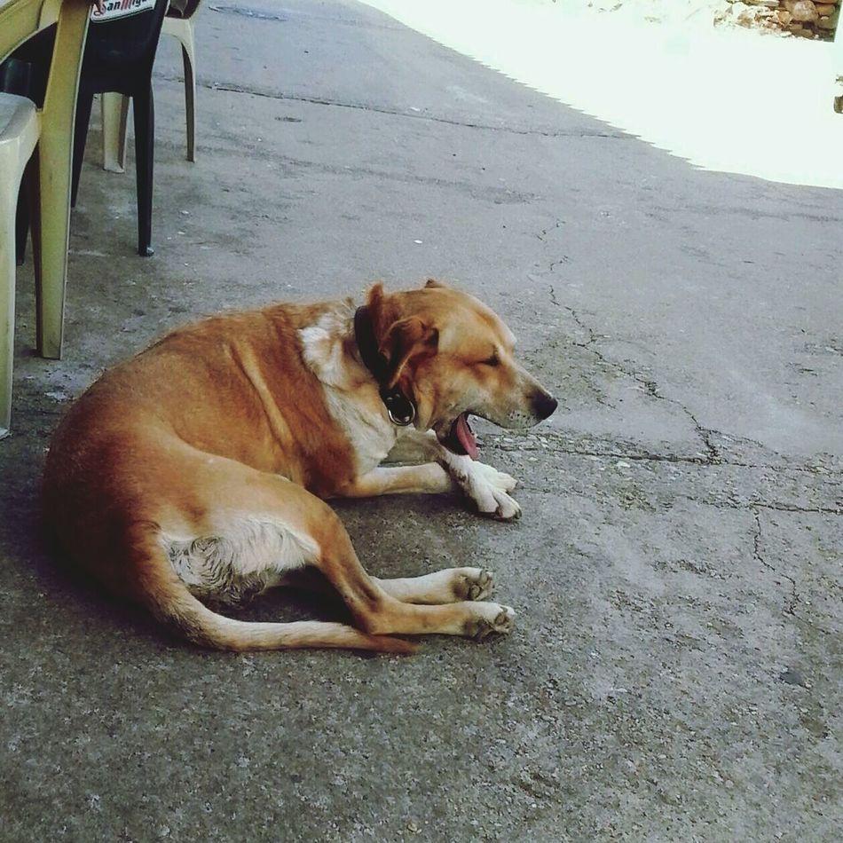 Sleepy Dog Dogslife Animal Animal Photography