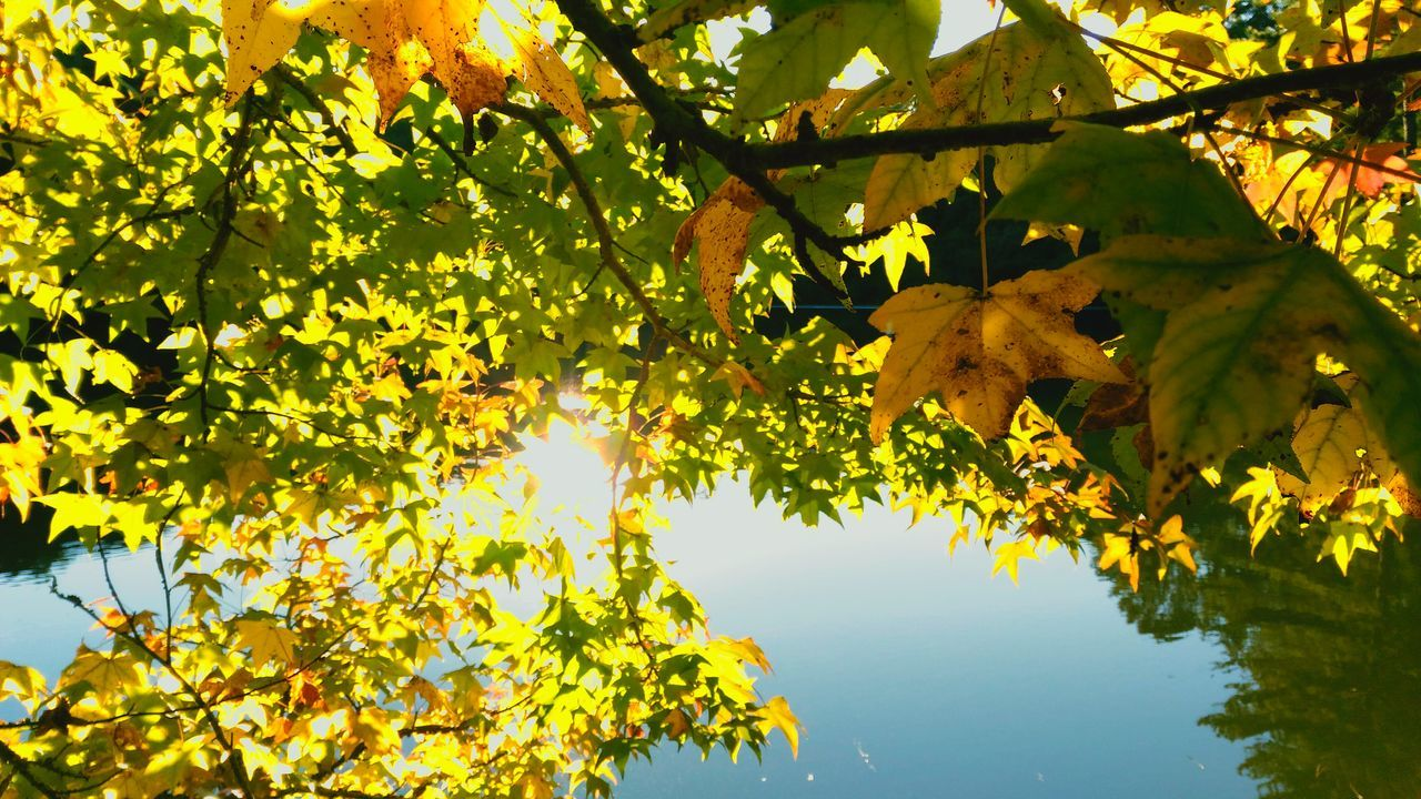 leaf, tree, nature, autumn, growth, branch, beauty in nature, fruit, scenics, outdoors, no people, day, sky, close-up, freshness