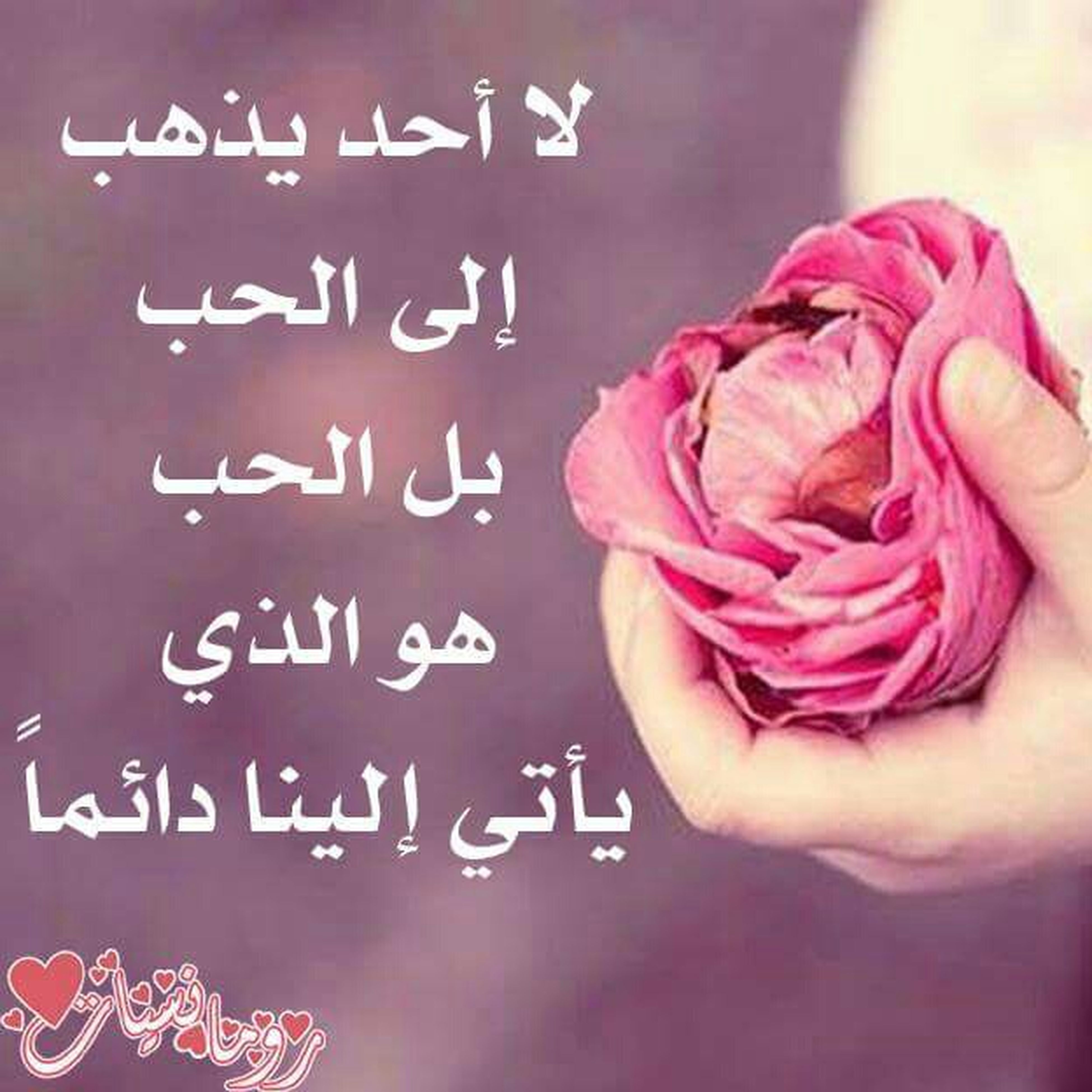 text, western script, communication, person, indoors, close-up, pink color, non-western script, holding, part of, red, human finger, message, focus on foreground, capital letter, lifestyles, cropped
