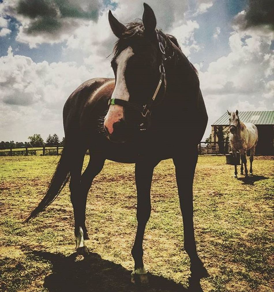 My buddy Sugar Pie! RamseyFarm Thoroghbredracing Selfies Thoroughbred Sugerpie Selfie Farms Horsefarm Farm