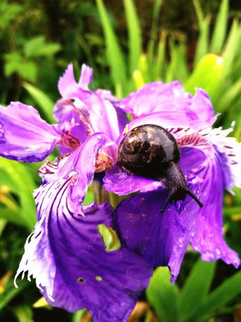 The Great Outdoors - 2017 EyeEm Awards Flower Purple One Animal Nature Insect Petal Fragility Animal Themes Plant Beauty In Nature Animals In The Wild Animal Wildlife Close-up No People Outdoors Growth Day Freshness Bumblebee Flower Head